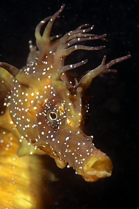 217 best images about seahorses on pinterest for Is a seahorse a fish