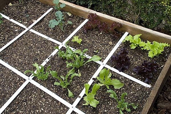 Gardening: Vegetable gardening for beginners. How to build a square foot garden