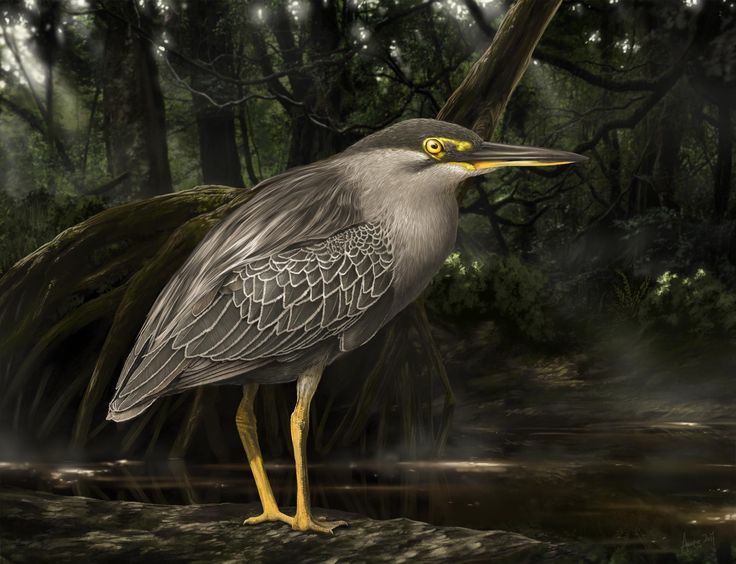 Striated Heron by aweng8892