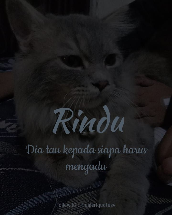 boyfriend quotes for him tentang rindu follow admin rozak