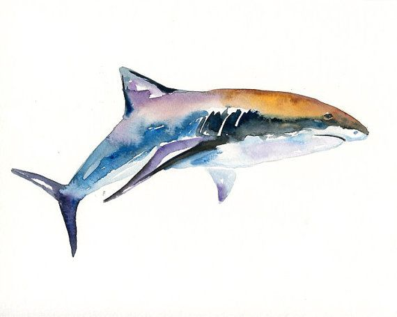 SHARK Original watercolor painting 10X8inch by dimdi on Etsy, $35.00