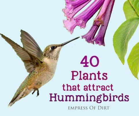 40-Plants-that-attract-hummingbirds-h1-6x