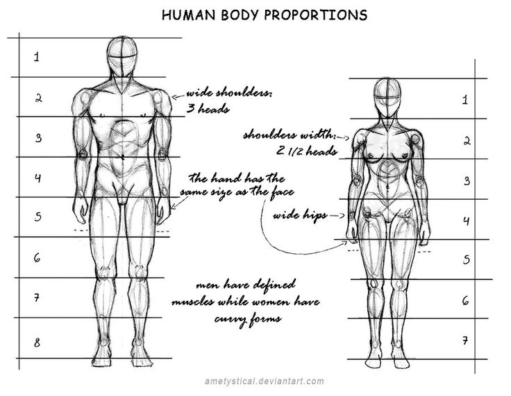 Best 25 human body proportions ideas on pinterest body for Size and proportion