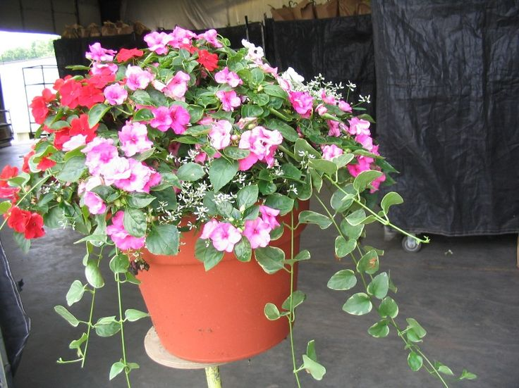 http://alekhouse.hubpages.com/hub/httpwwwOutdoorcontainergardeningPlantingabeautifulpotofflowerscom: Outdoor Flowers, Flowers Pots,  Flowerpot
