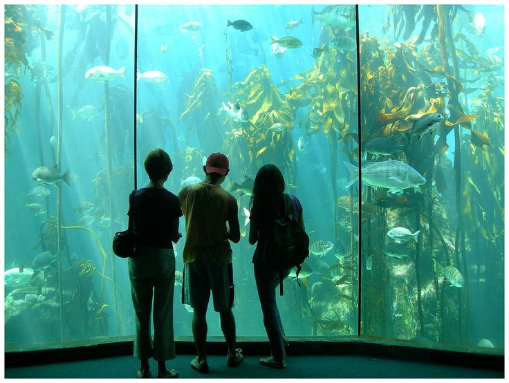 Two Oceans Aquarium at the V Waterfront, Cape Town
