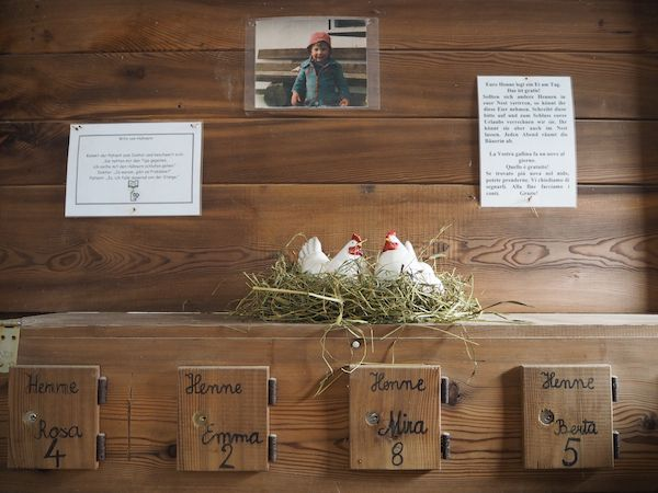 At farm #Mudlerhof in #Gsies every apartment has its own hen and can get every day fresh eggs! Roter Hahn - Farm holidays