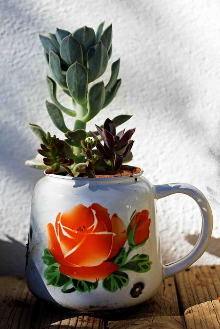 Karoo Bouquet