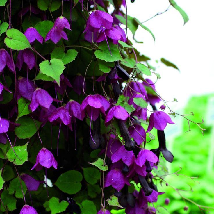 die besten 25 sonnige pflanzen ideen auf pinterest mehrj hrige pflanze bl hende pflanzen. Black Bedroom Furniture Sets. Home Design Ideas