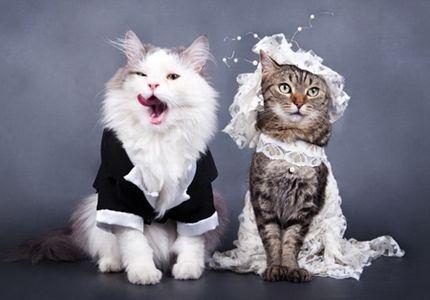 猫たちは嫌がるだろうが、確実に目の保養になる猫に衣装を着せる行為。 申し訳ないとは思っている、大変申し訳ないとは思っているがすんんんんんんんんんんごく可愛い。 とくにドレス姿などの高貴できらびやかな衣装がとても可愛い。 もうずっと着ていて欲しい位可愛い。 そのキュートな顔立ち、クリリンとした瞳にドレスは最高に合うのです。 きっと「写真撮る間だけ我慢してくれっ」と飼い主さんたちが懇願した姿が目に浮かびます。 そんな努力の結晶ともいえる画像を集めてみました。癒される事間違いなし。 【ドレス姿の猫達の画像15】 お嬢様、お茶の時間ですよ♪  可愛すぎる花嫁さん。  シースルー三毛猫さん。  立つと面白可愛いになっちゃう。  キュートすぎる。  素敵な淑女。  ロングドレスもお似合いで。  白猫さんにはウェディングドレスがぴったり。  高貴!!  可愛らしすぎるお花とお目目。  一緒にパーティを抜けだそうか。  エレガント。  ご結婚おめでとう!  イケメン、美女!  ちょっと違う。。
