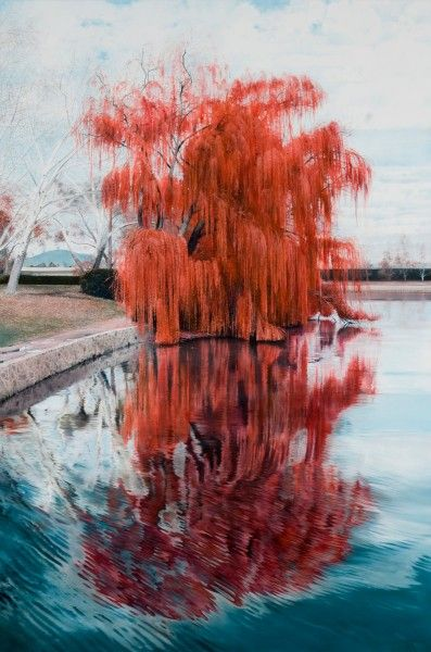 Weeping Willow - Michael Zavros Medium Category Paintings