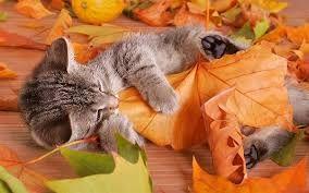 Risultati immagini per sfondi autunno