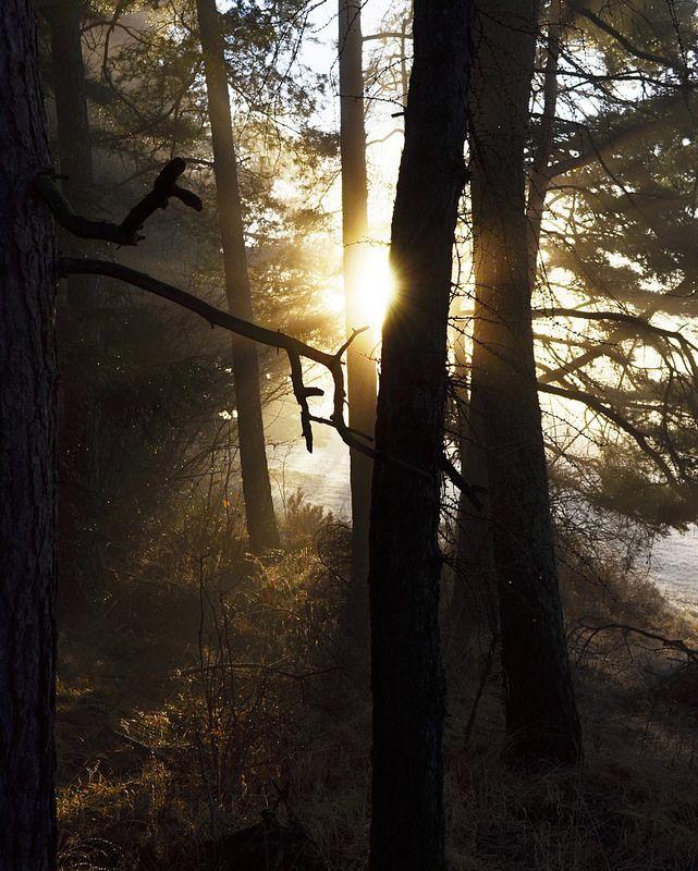 sun and tree II ...