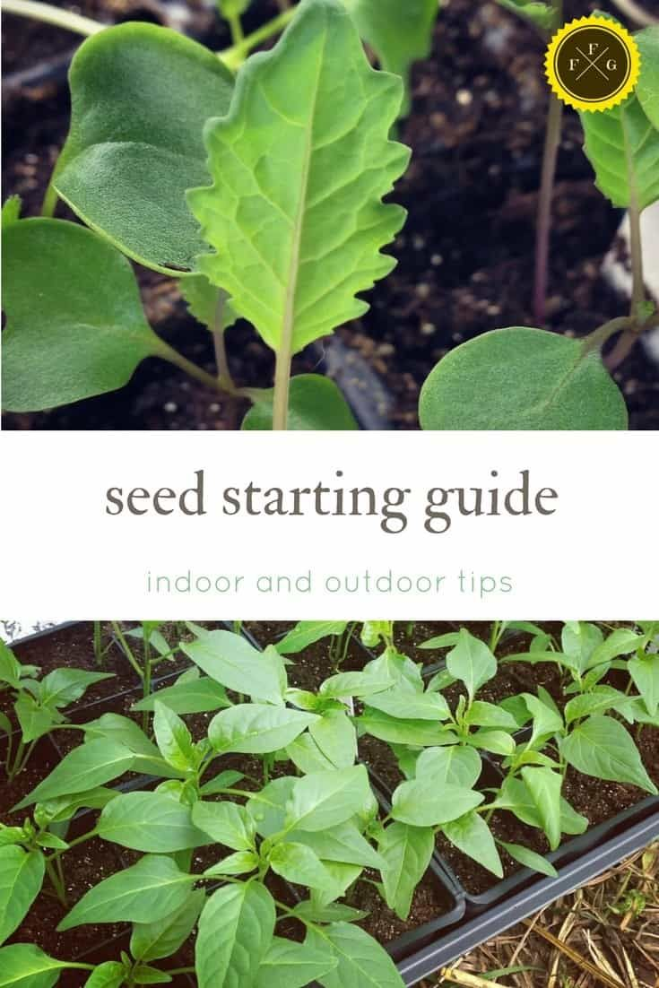 Seed Starting 101 How To Plant Seeds At Home Indoor Vegetable