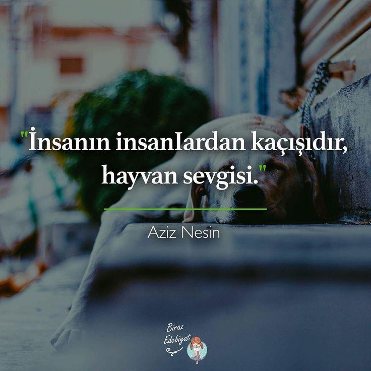 ➰İnsanın insanlardan qaçışıdır, heyvan sevgisi. #Aziz_Nesin #sözlər #ədəbiyyat