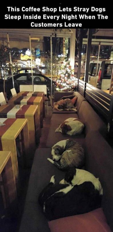 This restaurant allows stray dogs in at night after they close!