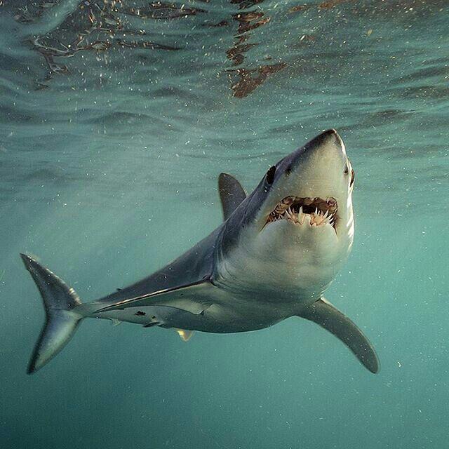 фото или картинки акул этом