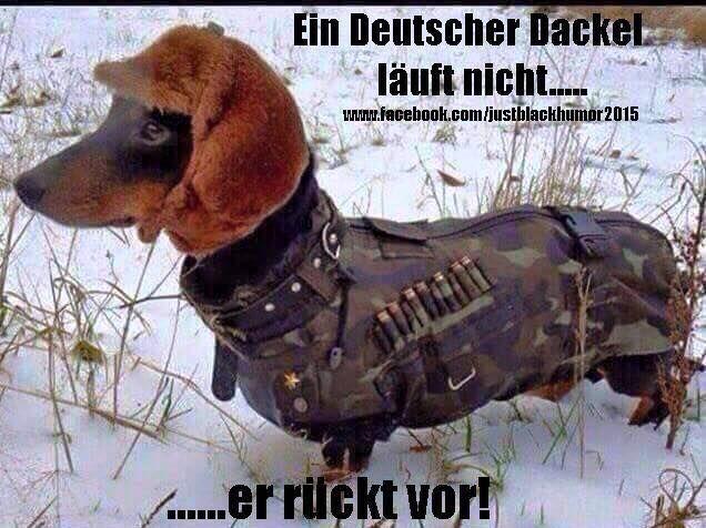 deutsche dackel
