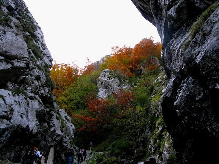 Desfiladeros de la ruta Foces de El Pino en el municipio de Aller #Asturias #España. //Gorges of the route Foces de El Pino in Aller #Asturias # Spain. Foto cedida por // Photo provided by Lito Estevez.