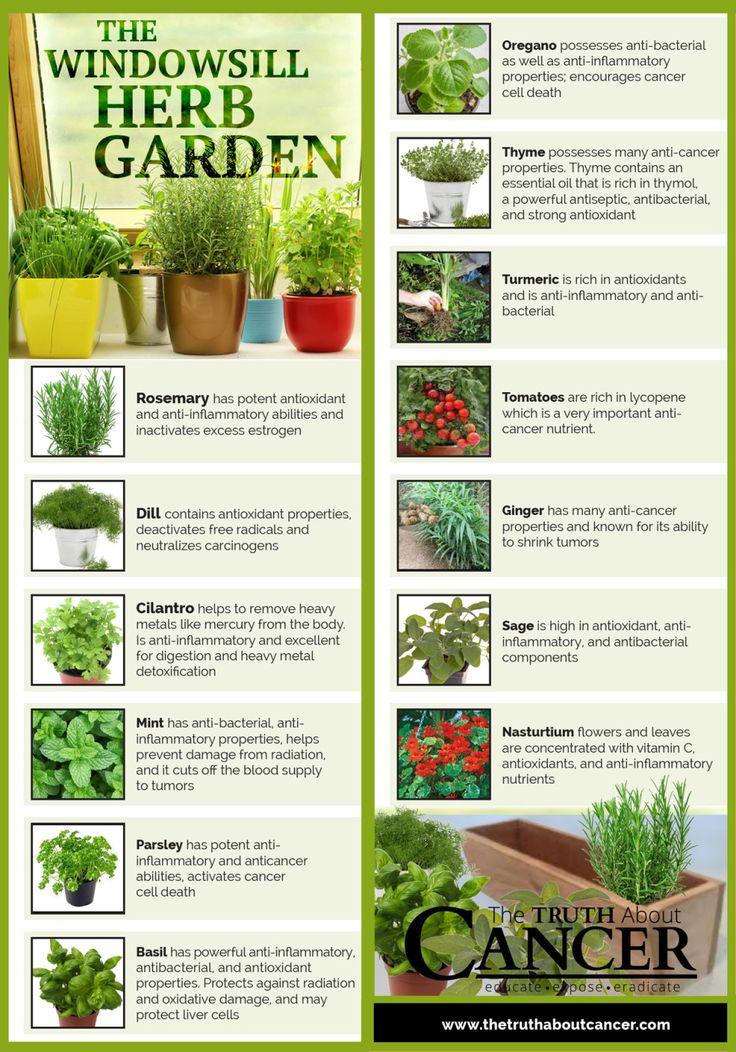 14 Cancer-Fighting Plants for Your Indoor Herb Garden
