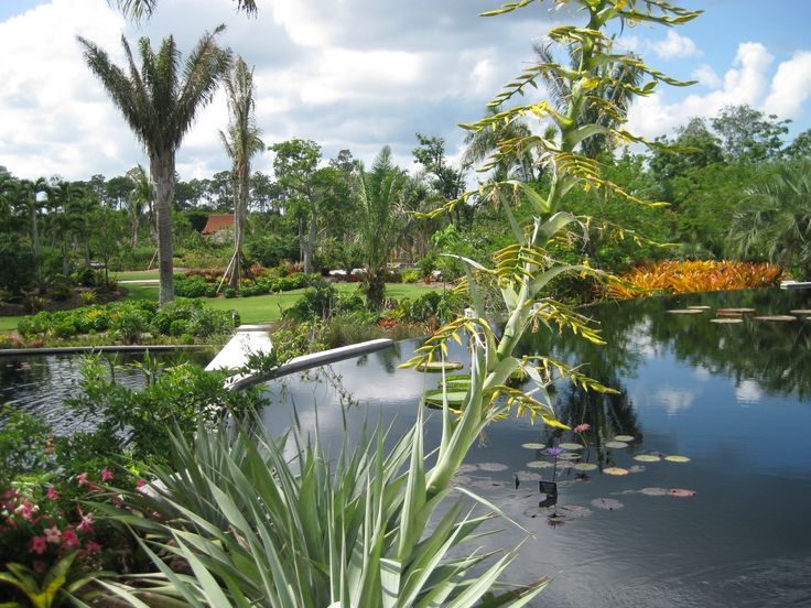 17 best images about botanical gardens on pinterest - Botanical gardens naples florida ...