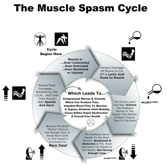 The 13 Best Anatomy Rocks Images On Pinterest Muscles Muscle And