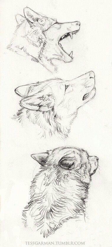 40 Free & Straightforward Animal Sketch Drawing Info & Concepts