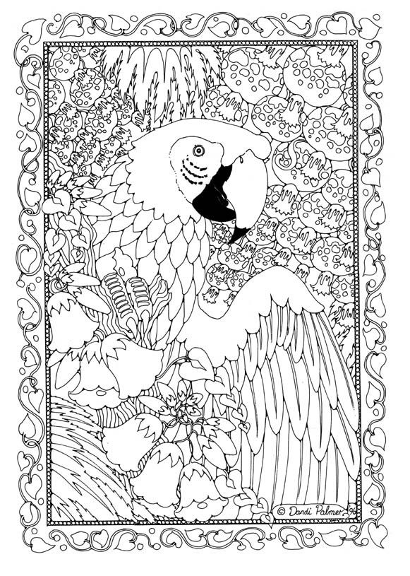 by dandi palmer dodo books pictures to colour in book one - Colour In Book