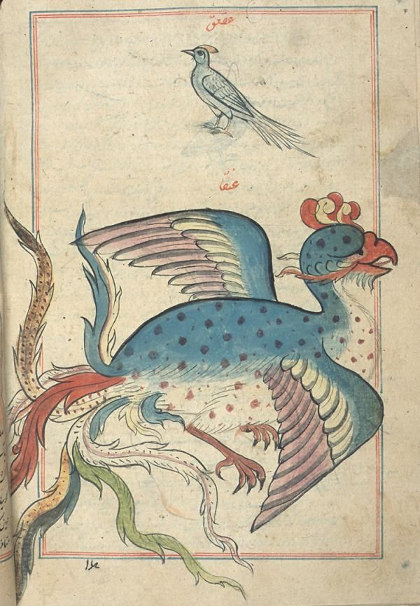 Kazvini, Acaibul Mahlukat Garaibul Mevcudat eserinde Simurg - A simurgh ('anqa', a mythical bird) and, above, a bird that appears to be a hoopoe but is labeled 'aq'aq (magpie).From a copy of 'Ajā'ib al-makhlūqāt wa-gharā'ib al-mawjūdāt (Marvels of Things Created and Miraculous Aspects of Things Existing) by al-Qazwīnī (d. 1283/682). Neither the copyist nor illustrator is named, and the copy is undated. The nature of paper, script, ink, illumination, and illustrations suggest that it was…
