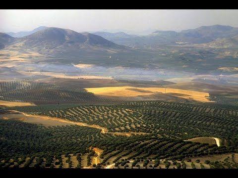 Olivos y Aceite de Jaen https://www.youtube.com/watch?v=kv_r82XLQo4