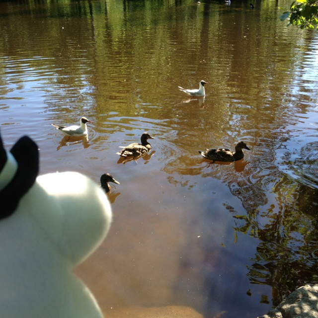 Moominpappa feeding ducks in the Ainola park. #MoominsinOulu