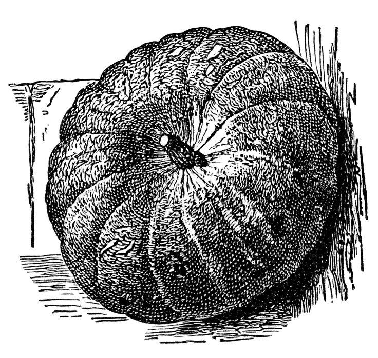 vintage pumpkin clip art, Halloween clipart, black and ...