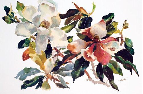 Magnolias in May