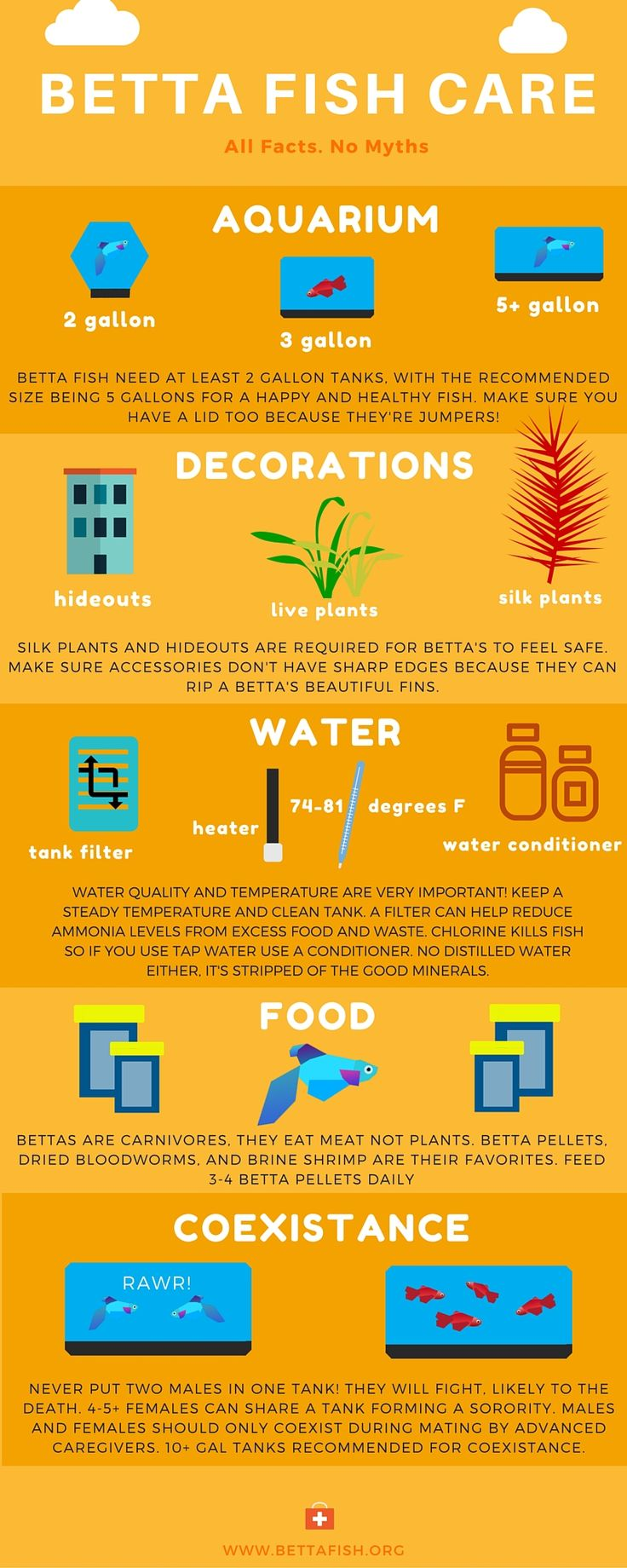 Betta Care 101 Infographic