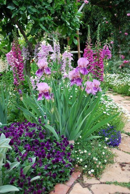 Irises and foxgloves. From left to right; Stachys lanata Pansee Iris barbata Erigeron Digitalis purpurea