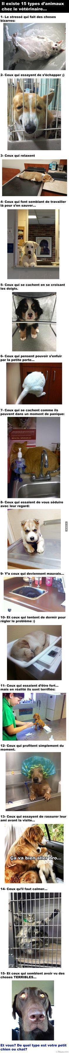 Animaux au Vétérinaire – Québec Meme +