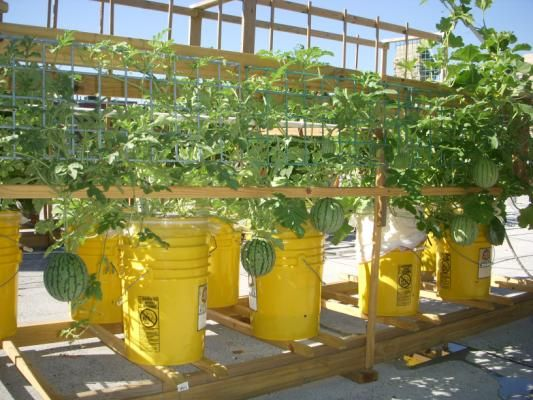 534 Best Container Vegetable Gardening Images On Pinterest | Container  Vegetable Gardening, Gardening And Plants