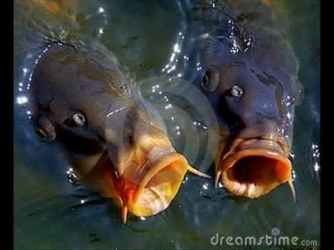 Janek Ledecký ryba rybě