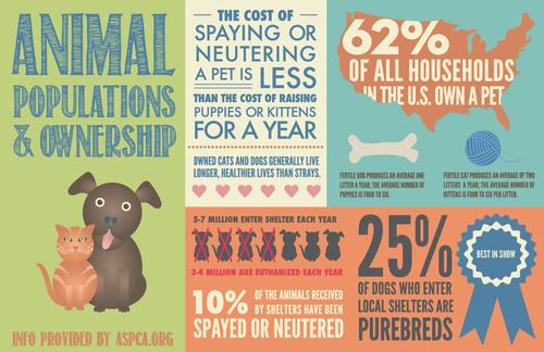 Animal Populations And Ownership Via Aspca Animal Infographic Spotted Animals Pets