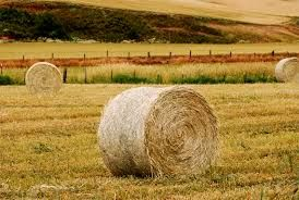 Bales of Hay For Sale Kennewick WA
