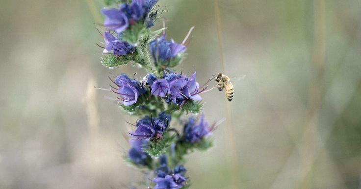"""¿Cuál es el papel de los insectos y aves en la polinización?. El término """"polinización"""" se refiere al proceso por el cual los granos de polen son transferidos desde la parte masculina de la planta hacia la parte femenina, fomenta la fertilización y permitiendo la reproducción genéticamente diversa. Aunque algunas plantas se auto polinizan, otras requieren ayuda externa. Los organismos que ayudan a las ..."""