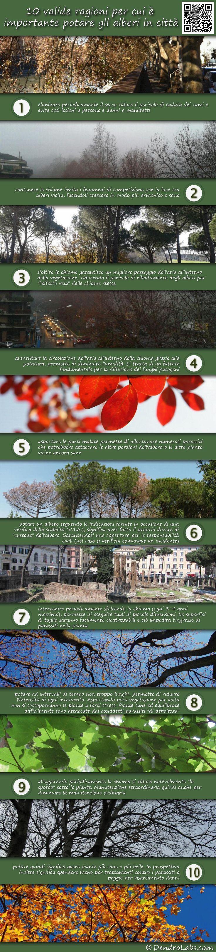 10 valide ragioni ragioni per eseguire la potatura degli alberi in città.