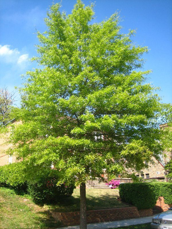 16 best trees make a difference images on pinterest