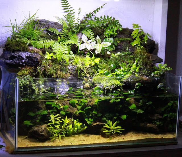20 gallon rimless paludarium vivarium inspirations for Racine pour aquarium