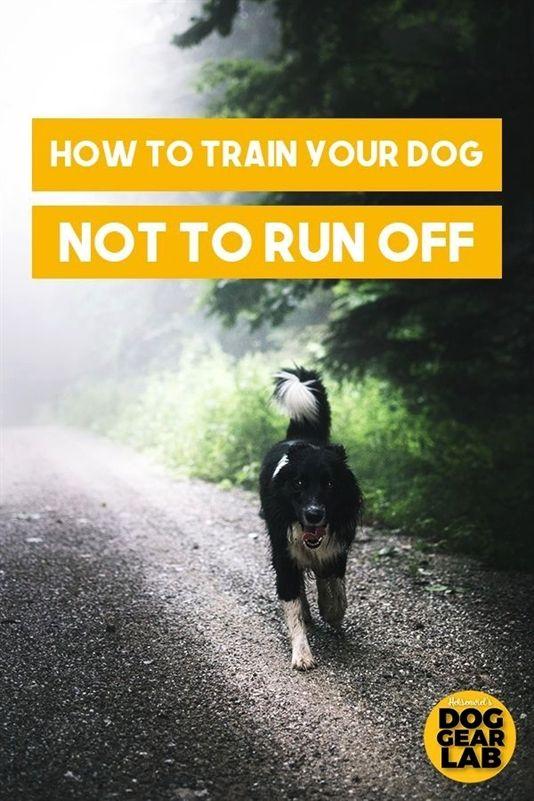 Pettech Dog Training Active Collar Dog Training Okc Dog
