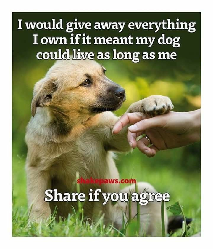 Yes I wish my pups could live as long as I do, and then go when I go..