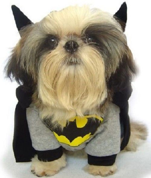 New Pet Dog Clothing Warner Bros Batman Fancy Dress Costume Various Sizes #DogBlessYou #ClothingShirts
