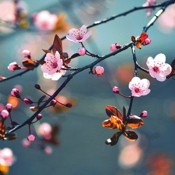 Skleněný obraz Beautiful Spring Day 30x30 cm   Bonami