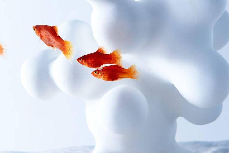 Modern Sculptural Fish Tanks – Fubiz Media