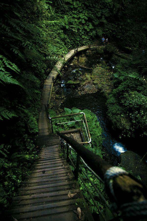 Wood path, Taiwan