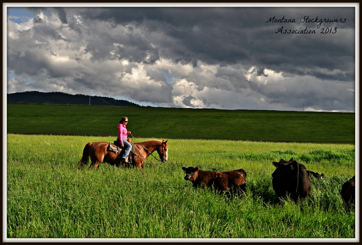 Mytty Angus Ranch ~ Montana